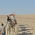 верблюжья прогулка