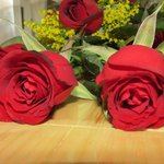 Rosas de Belil