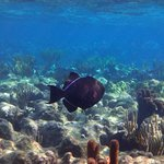 Triggerfish at the reef