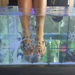 Enjoying the Garra Rufa Fish Spa Treatment!!!