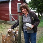 Just finished collecting eggs & having a visit with the affectionate goats