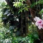 Orchideenblüten im subtropischen Dschungel