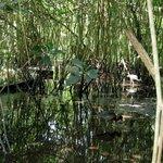 Everglades Sumpfgelände