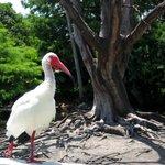 Brutstätte für zahlreiche Vogelarten