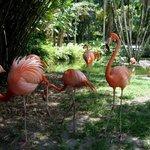 Flamingos - die Namensgeber der Anlage