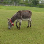our adopted donkey