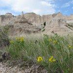 Notch Trail Wildflowers