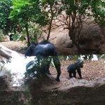 Une famille chimpanzé