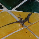 Gecko in our shower...pretty darn cute !