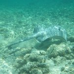 Snorkeling in Soliman bay