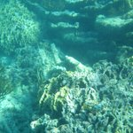 Snorkeling in Soliman bay