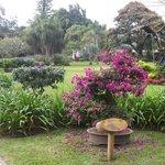 Una vista del jardín