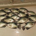 a good night of crappie fishing