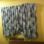 Bear curtains