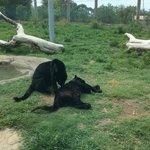 Cat Canyon. Lee Richardson Zoo