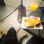 Enjoying an egg sando and mimosa with my fur baby.