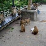 Monkey Mountain 3