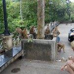 Monkey Mountain 7