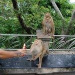 Monkey Mountain 8