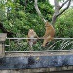 Monkey Mountain 10