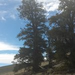 Bristlecone Trails