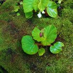 plants growing on mossy rock!