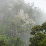 Unique view of the rainforest