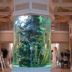 Aquarium in lobby