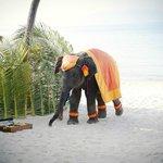 elephant at wedding