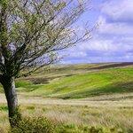 The beautiful moors