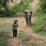 dogs and elephants on a walk