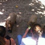 Capybara experience