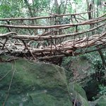 This Root Bridge is under preparation - may take next ten years to be completed by nature