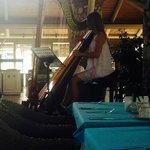 Breakfast harpist.