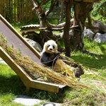 Xing Bao le Panda