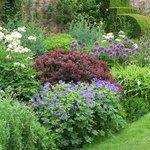 Stunning planting!