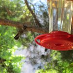 Hummingbirds on Patio