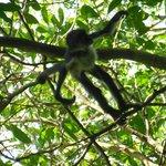 Punta Laguna Spider Monkey Reserve