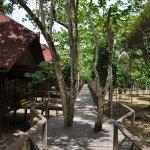 Accès bungalows