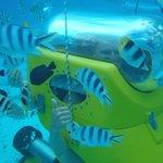 fish everywhere!