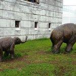 Mamutes do museu