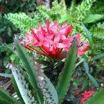amazing flora around the rooms