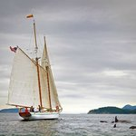Private Charter aboard the Dirigo II - Sailing with the Orca Whales in the San Juan Islands!