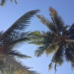 Beautiful coconut palm trees