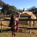 Bottle feeding a baby giraffe!!  :)