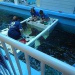 Feeding the Nurse Sharks