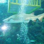 Shark on Dive in Florida Aquarium