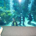 Shark Dive Florida Aquarium