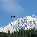 Model RC Airplane---Mt Shasta Background