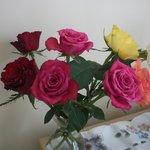 Rosy evening